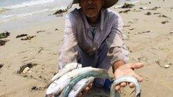 Tạm cấp 1.680 tỷ đồng bồi thường sự cố môi trường biển lần 2