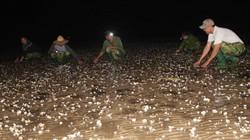 Chủ tịch tỉnh Thanh Hóa chỉ đạo xử lý nghiêm cá nhân, tổ chức đổ chất thải ra biển