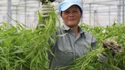 Lan tỏa làn sóng đầu tư nông nghiệp công nghệ cao