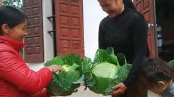 Độc đáo tục lệ biếu nhau rau sạch thay quà Tết ở Ninh Bình