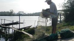 Quảng Nam: Ngày tết, thu tiền triệu đồng nhờ tôm, cá
