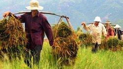22 năm gắn bó với nông dân