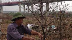 Chủ vườn tất bật chuẩn bị chăm sóc cho vụ đào năm mới