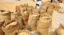 Xuất khẩu gạo vẫn trầm lắng, bế tắc