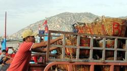 Ninh Thuận: Ra khơi đầu năm, ngư dân phấn khởi trúng giá cá cơm