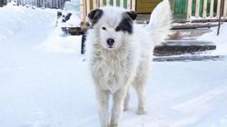 Rét âm 12 độ, chó sưởi ấm cứu bé trai bị mẹ bỏ rơi