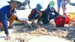 Quảng Trị: Biển đã hồi sinh