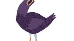 """""""Sự tích"""" chú chim bồ câu màu tím làm mạng xã hội phát cuồng"""