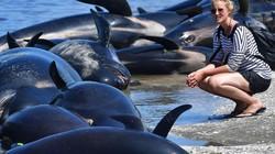 New Zealand đối phó 400 xác cá voi sắp phát nổ