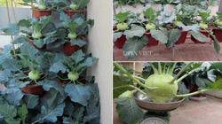 """Mẹ Hà thành tiết lộ cách trồng """"ruộng bậc thang"""" su hào tại nhà"""