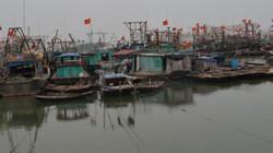 Quảng Ninh: Hơn 70 hộ dân nuôi cá lồng bè có nguy cơ vỡ nợ