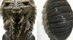 Bọ bọ biển - trông thì ghê nhưng thịt ngon miễn chê