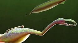 Loài sinh vật quái dị khiến các nhà khoa học tranh cãi