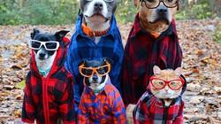 Ai dám bảo chó, gà, lợn, mèo không biết tạo dáng nào?