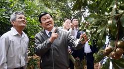 Nguyên Chủ tịch nước Trương Tấn Sang: Sớm có tổng kết để hướng dẫn trồng mắc ca