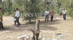 Phú Yên: Xin tận thu cây chết, chặt luôn cả cây sống?