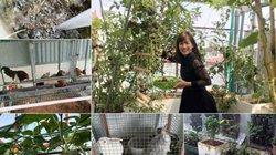 Trang trại mini ngập rau, cá, thỏ, gà... của mẹ 8X giữa lòng Hà Nội