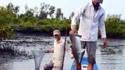 Độc đáo dùng rễ cây thuốc cá để bắt cá