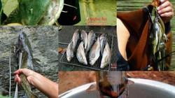 """5 loài cá """"đặc sản"""" ở miền Tây Nghệ An"""