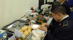 SỐC: Mỗi ngày, người Việt bỏ ra 44 tỷ đồng ăn trái cây Thái, Trung Quốc