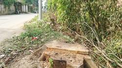 Thêm một xã ở Hà Nội bất ngờ chặt hàng loạt cây xanh