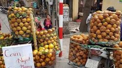 Nghi ngờ giống cam Cam Cao Phong bị cam Trung Quốc nhái nhãn