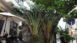 """Những căn nhà đặc biệt """"ôm trọn vỉa hè"""" trên phố Hà Nội"""