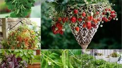 7 loại trái cây và rau mà nông dân phố có thể trồng trong giỏ treo