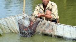 Hết thời cá kèo, bán 3 tấn cá lỗ hơn 50 triệu đồng