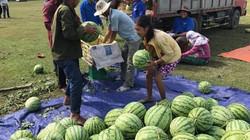 Các điểm liên hệ mua dưa 2.000 đồng/kg ủng hộ nông dân Quảng Ngãi