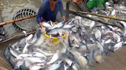 """Nông lâm thủy sản """"rinh"""" về 7,6 tỷ USD kim ngạch trong quý 1"""