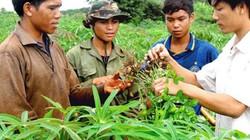 Khuyến nông hỗ trợ tích cực, nông dân làm ăn thêm hiệu quả