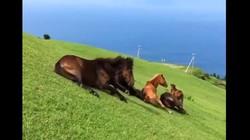 Cười té ghế xem cách ngựa đi xuống dốc