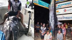 Úc: Cá cờ xanh to chưa từng thấy, phải dùng cần cẩu để nhấc lên