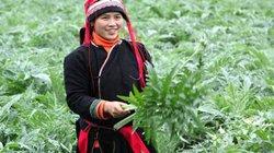 Ông Triệu Tài Vinh muốn biến Hà Giang thành thủ phủ cây dược liệu