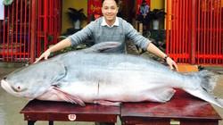 'Quái ngư' dài 2,3m nặng 1,6 tạ 'vượt biên' từ Campuchia về Việt Nam