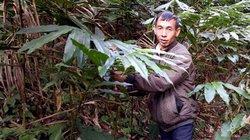 Làm giàu ở nông thôn: Dựng nhà tiền tỷ từ...15 cây sa nhân xanh
