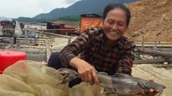 Nuôi con bán Tết: Cá lồng đặc sản sông Đà, xuân nào bán cũng chạy