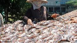 Làng nghề đặc sản khô cá bán tết thơm nức mũi, giá hấp dẫn