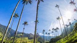 """Lạc vào """"chốn thần tiên"""" có những cây dừa cao nhất thế giới"""