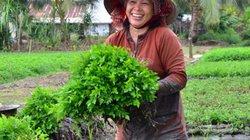 Chỉ cần thay đổi cách trồng, rau cần nước VietGAP bán được giá ầm ầm