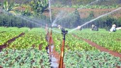 Dẫn nước tưới bằng đường ống: Lợi ích lớn nhưng còn nhiều trở ngại