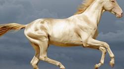 """TQ: Bỏ 300 triệu USD mua ngựa quý huyền thoại """"mồ hôi như máu"""""""