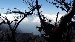 Cụ dẻ nghìn tuổi báu vật của đỉnh núi Pờ Ma Lung