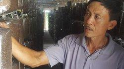 Làm giàu ở nông thôn: Kiếm hơn nửa tỷ từ trồng nấm sạch
