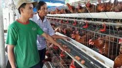 Bỏ nuôi heo, theo con gà siêu trứng, anh Châu có doanh thu 1,5 tỷ