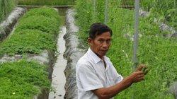 Thu nhập từ khổ qua rừng cao gấp 3-4 lần trồng lúa