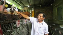 Làm giàu ở nông thôn: Nuôi chồn hương nhẹ công, lãi hơn 300 triệu/năm
