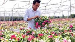 Vườn hoa treo tiền tỷ giữa đồi cà phê