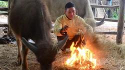 Lai Châu: Rét xuống 2 độ, người dân đưa cả trâu vào nhà tránh rét
